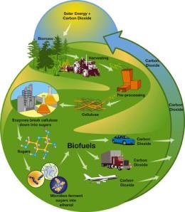biofuel conversion