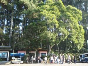 Hutan Taman Ir H Juanda